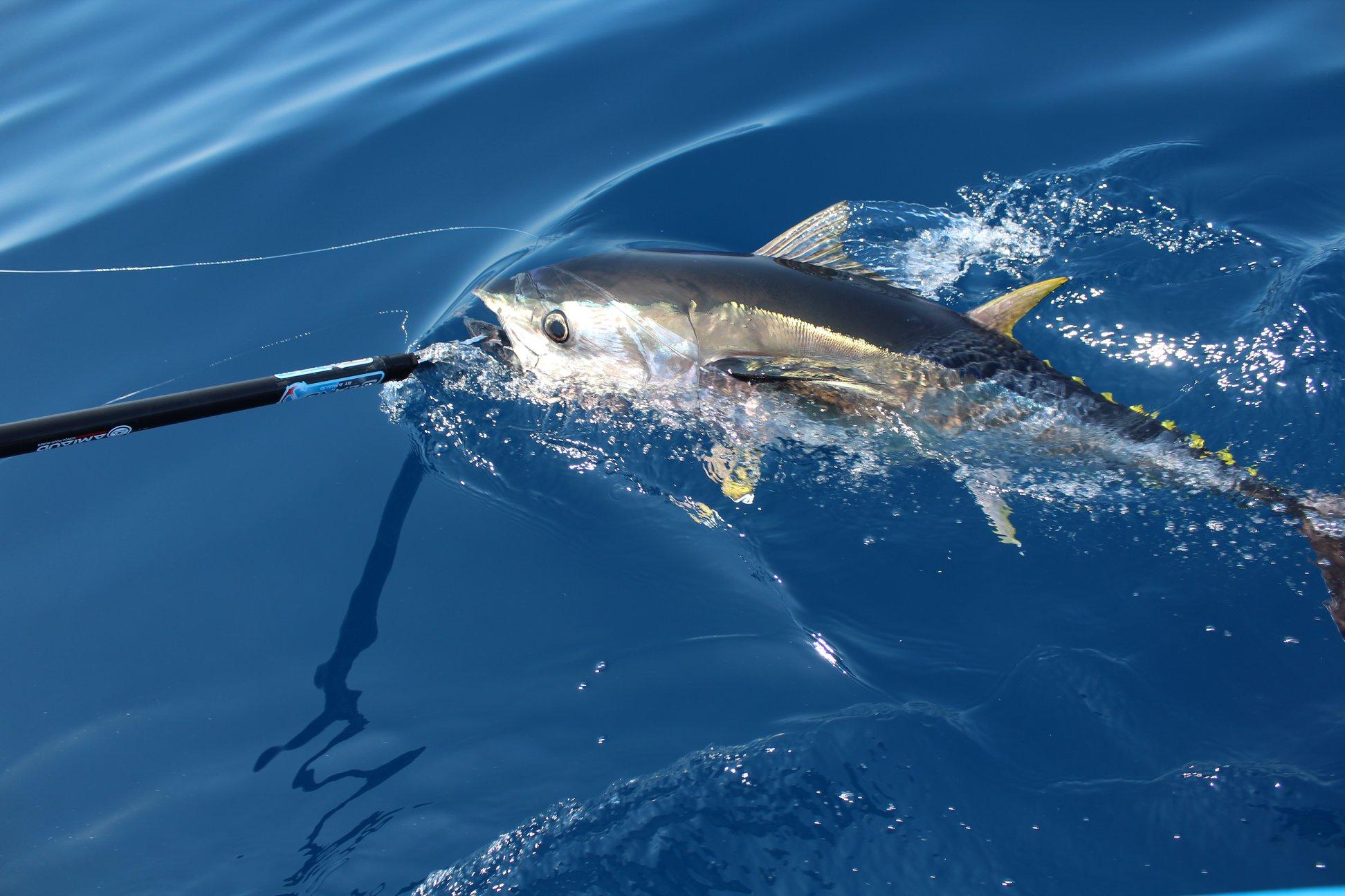 Pêche en mer